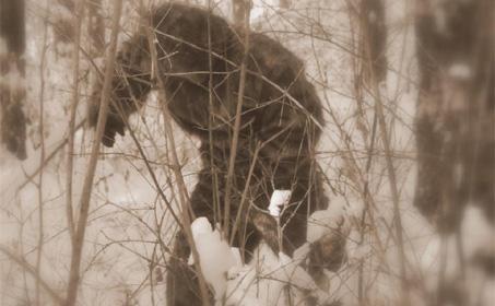 По следам Снежного человека, Путешественник